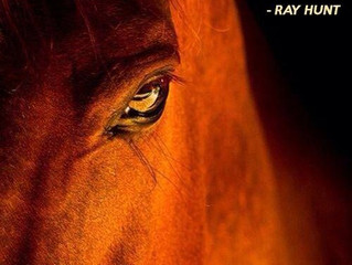 If the human can give 5%.  The horse will com from the otherside with 95% - Ray Hunt