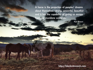 A horse is the projection of...
