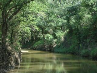 560 acre +/- Wild Sabanna River Ranch.