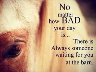 No matter how bad your day is…there is always someone waiting for you at the barn.