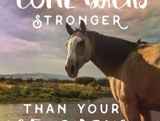 Make your come backs stronger than your set backs.