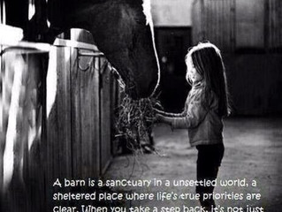 A Barn is a sanctuary…