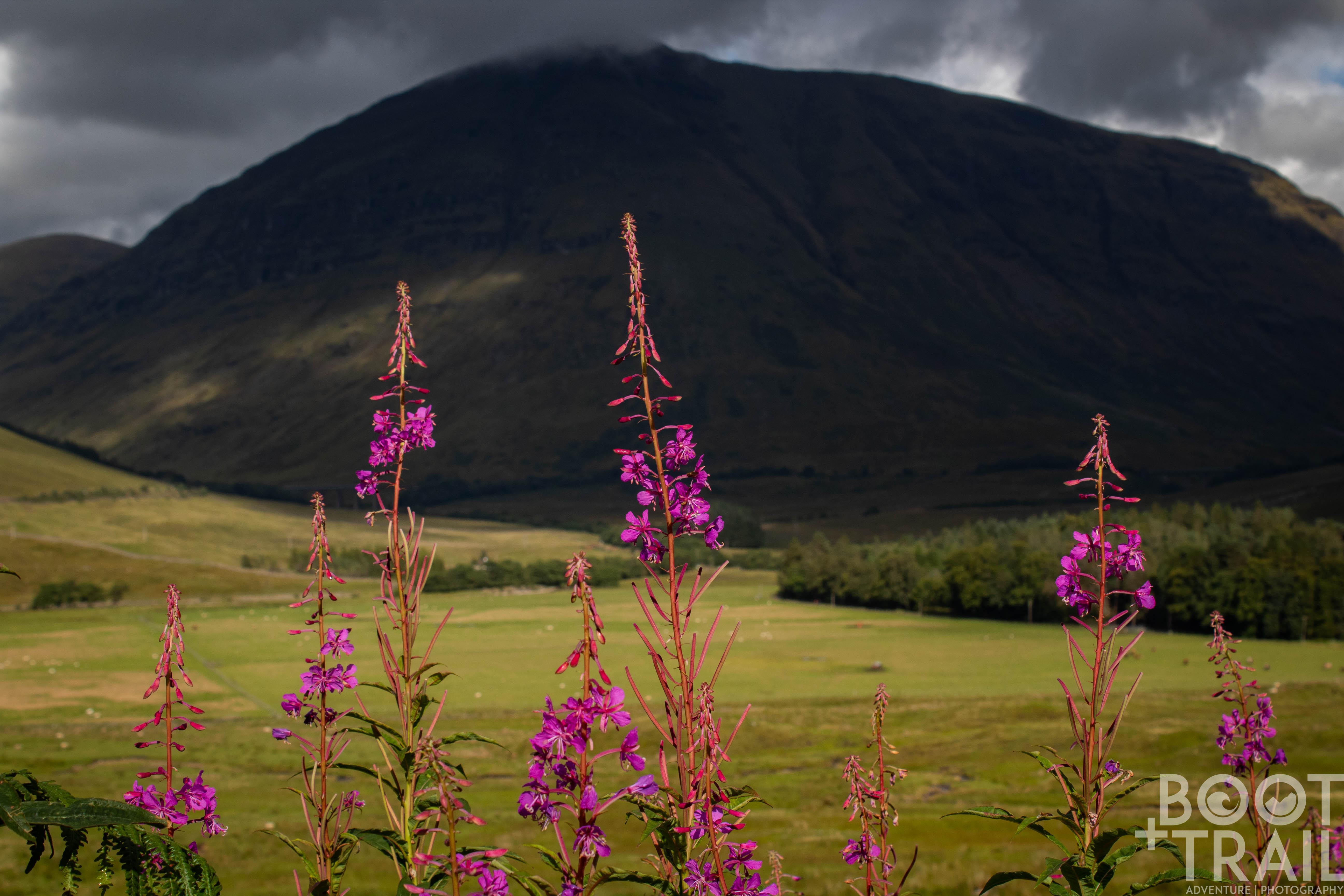 Highland Vibrance