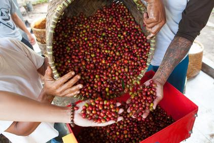 Beautiful Harvest in Java