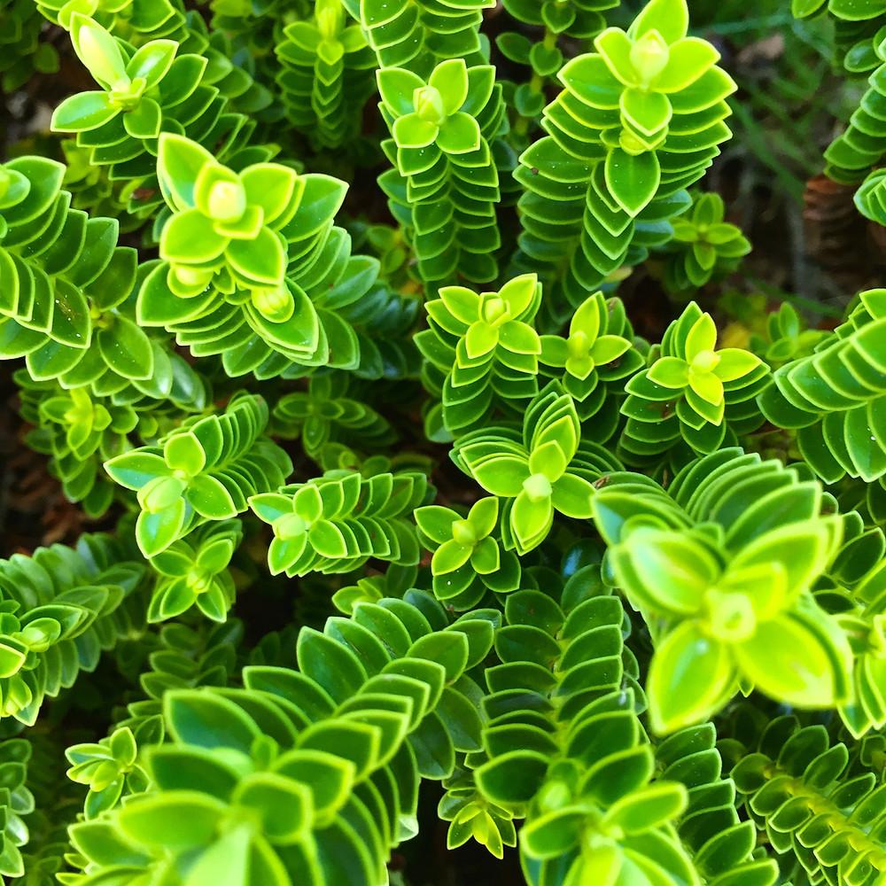 green, growth, plant, brand, design, yellow, leaf