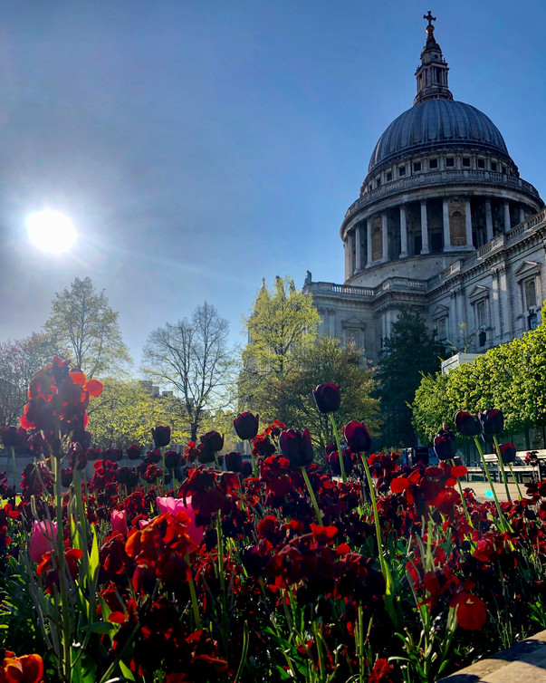 Tulips and St Pauls