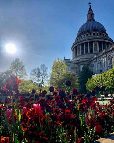 Tulips and St Pauls