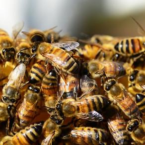 15. SABOR PČELARA KOD PETROVCA NA MLAVI: Povećane subvencije za pčelare