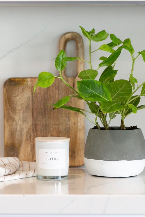 MDC Spring Candle