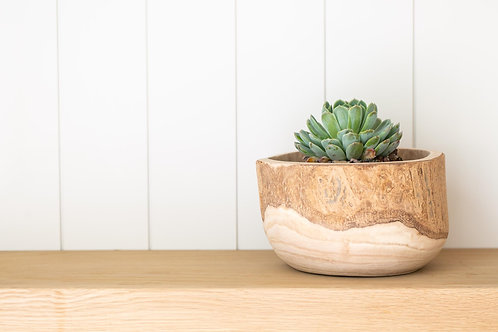 Eden Paulownia Wood Planter