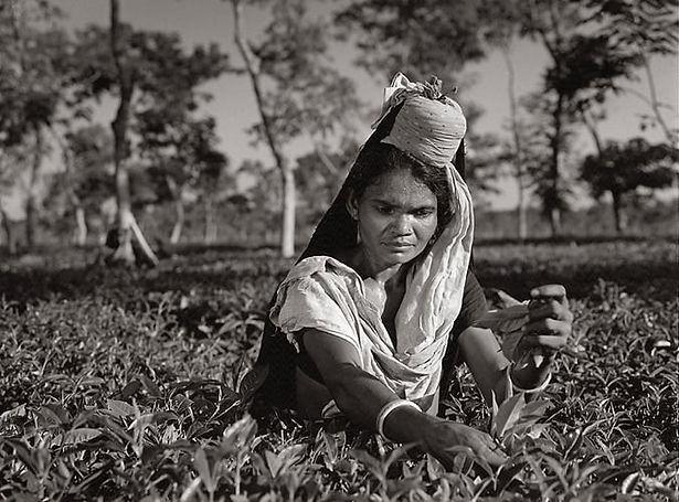Sacha Dean Biyan   Darjeeling, India