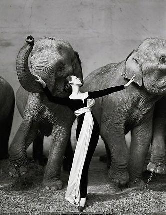 Richard Avedon, Elephants
