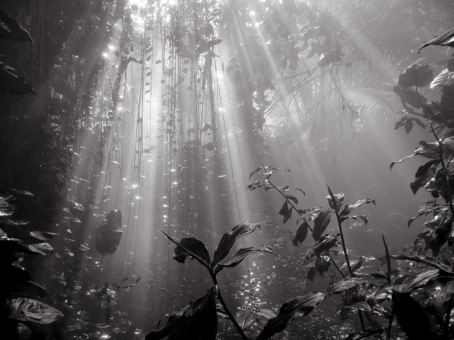Sacha Dean Biyan | Amazon Jungle