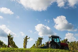 Grape-harvest,-landscape-875300564_3869x