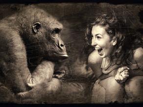 Sobre humanos e chimpanzés