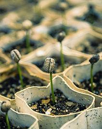 Seedlings_edited.jpg