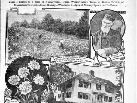 Genealogy Discoveries: Thurlow and Allied Lines of Newbury Massachusetts
