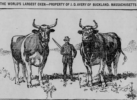 American Farmer James Deane Avery World's Largest Oxen 1897