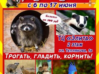 """Уникальная контактная зоовыставка """"Джуманджи"""""""