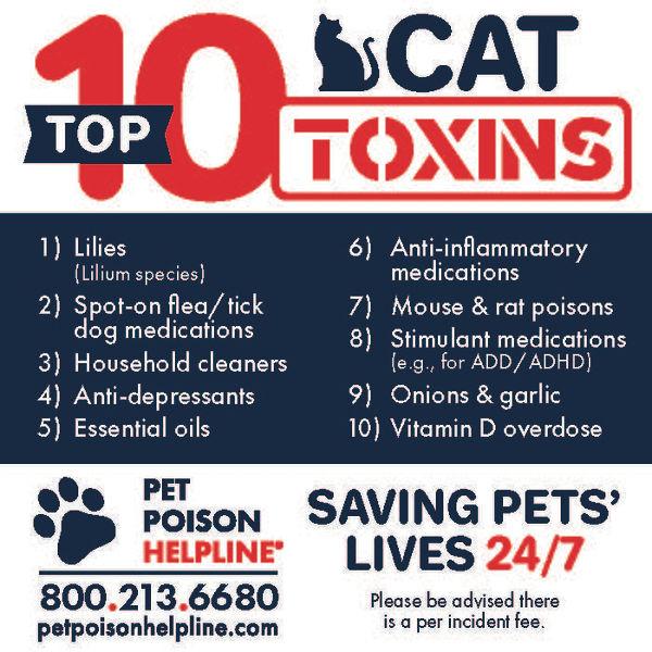 cat toxins.jpg