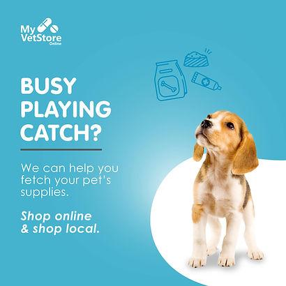 Busy playing fetch.jpg