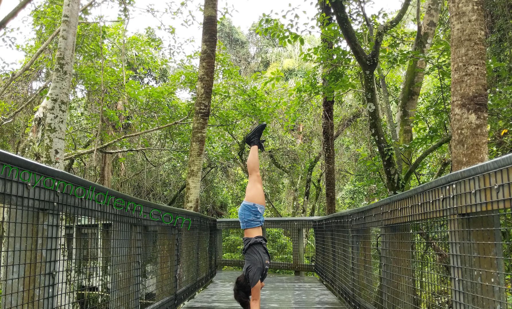 Tall Cypress Coral Springs FL_maya.jpg