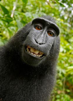 Macaque selfie