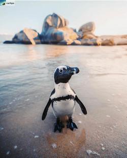 Penguin Poser