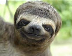 Funny Sloth