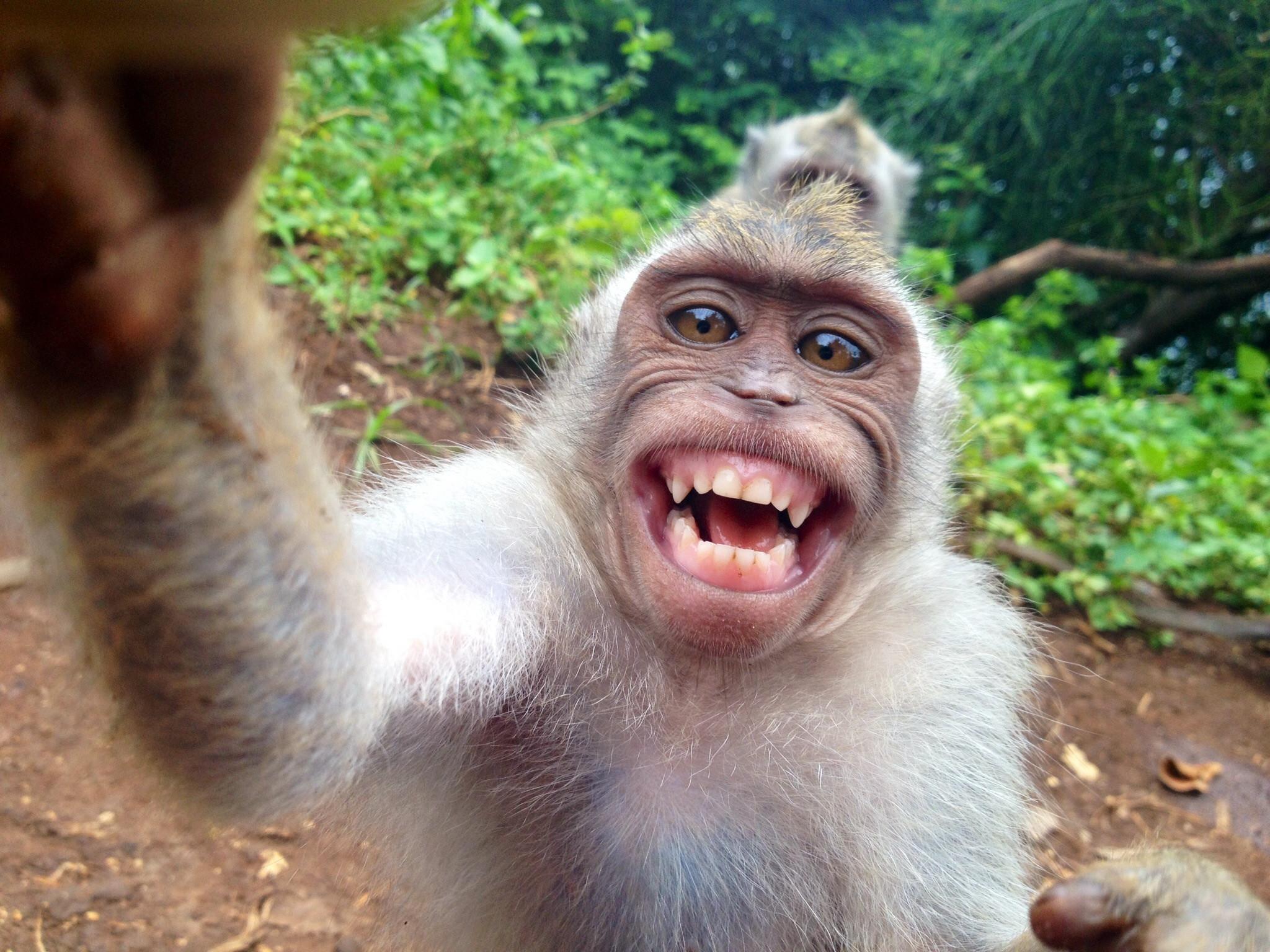 monkeyselfie