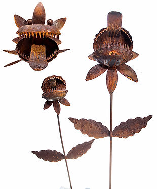 N58_N58M_VENUS_FLY_TRAP_30.00-15.00__407
