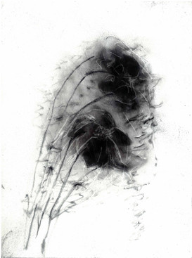 Untitled, Charcoal on Paper, 2009