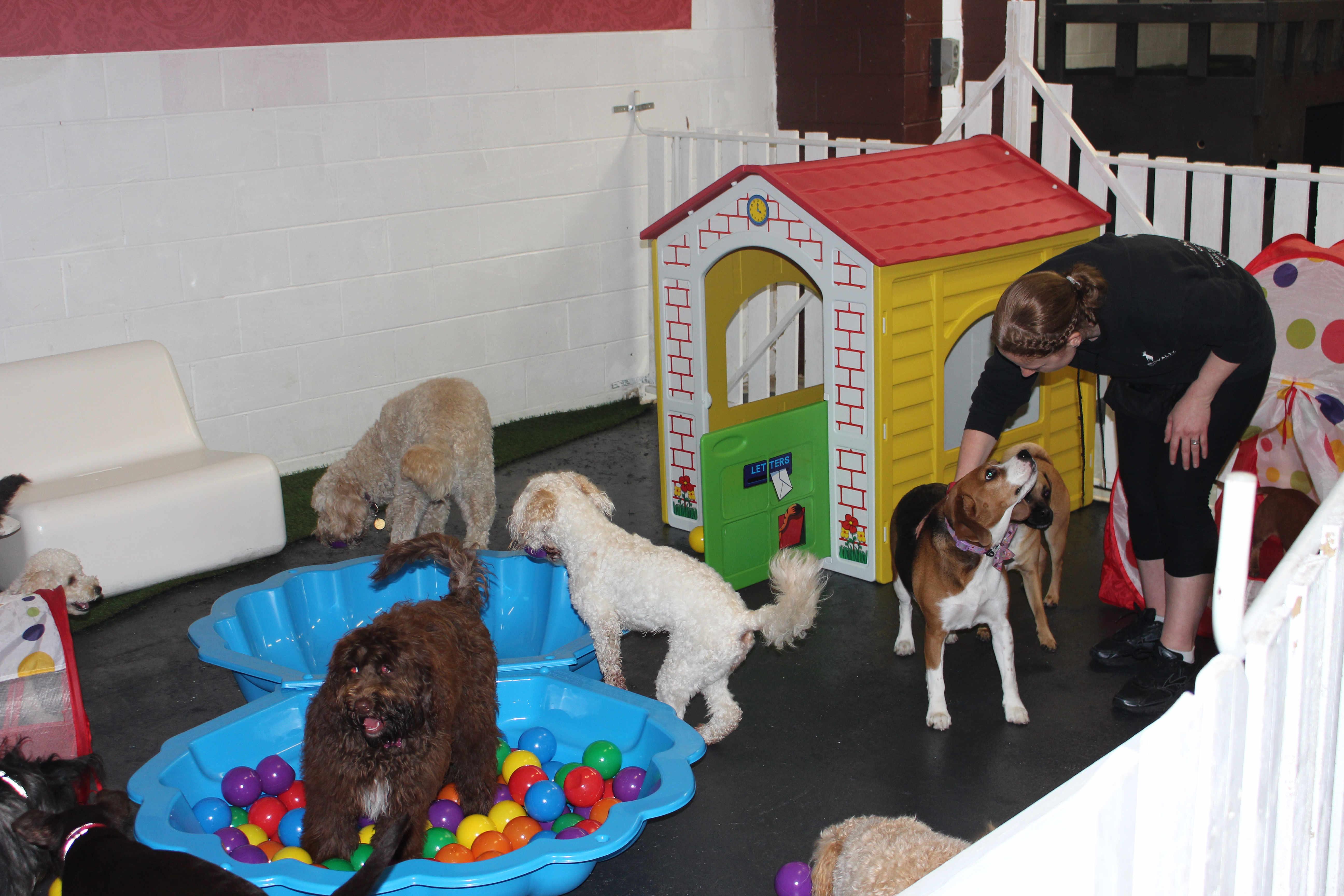 Puppy playtimes