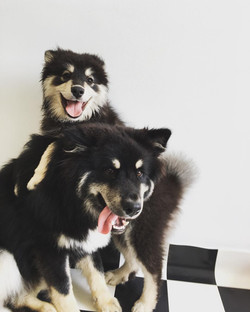 Lots of Happy Dogs