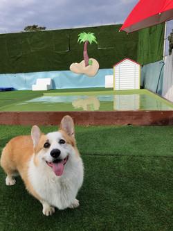 Puppy pool