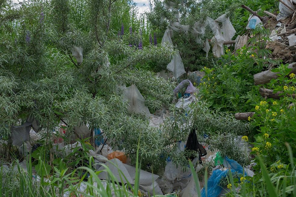 Landfill (2 of 17).jpg