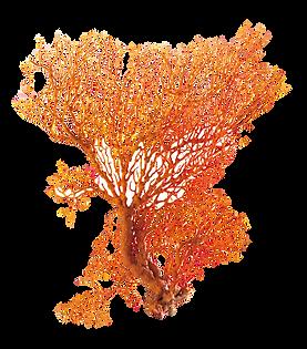 korall2.png