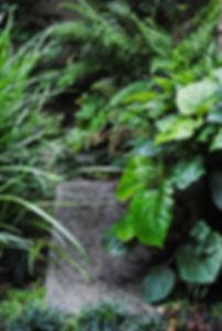 Midori Gardens Woodland Garden Design