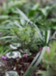 Midori Gardens Planter Design
