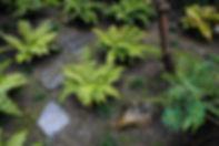 Midori Gardens Still Garden Design