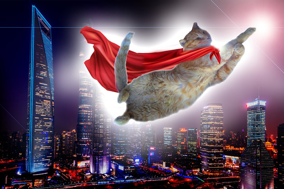 super cat super hero bruce.jpg