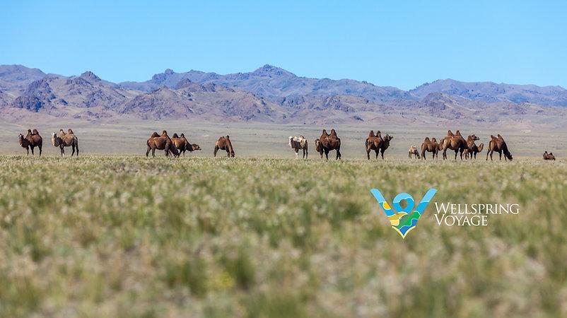 Muughi Gobi Desert.jpg