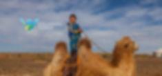 Muughi Bactrian Camel.jpg