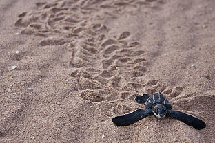 turtle(f).jpg