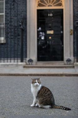 Larry the 10 Downing Street cat