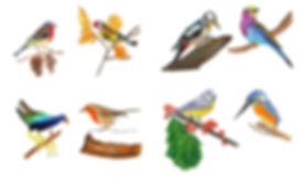 Oiseaux aux crayons de couleur