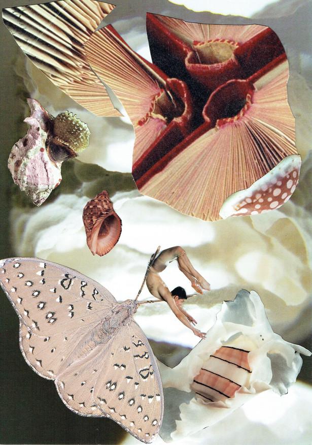 A Cambrian Dream #2