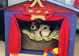 Izzy, our school comfort dog sitting in her dog house.
