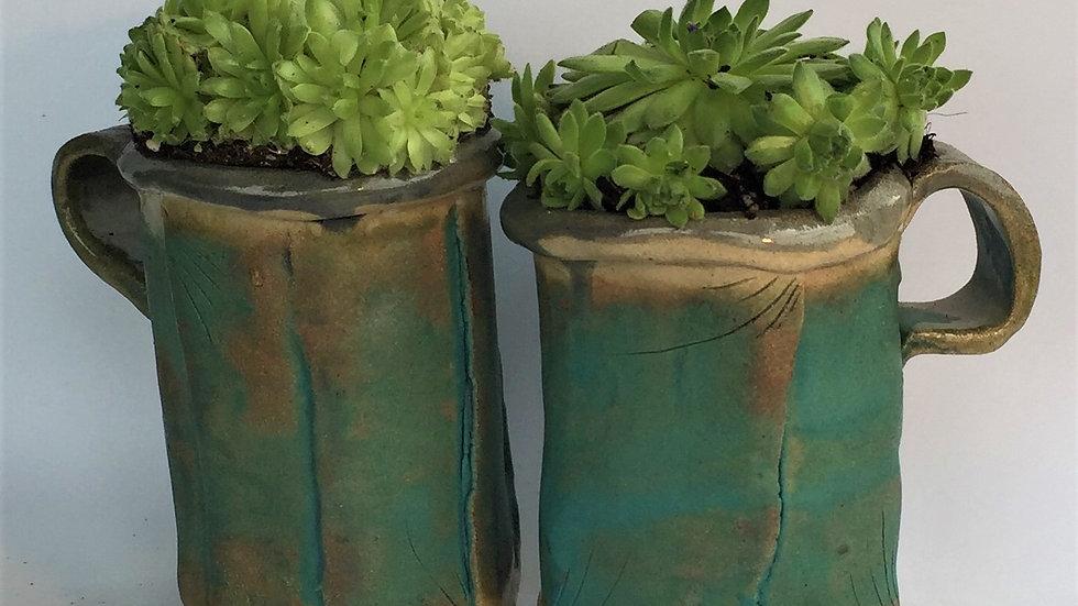 Big mug succulent set