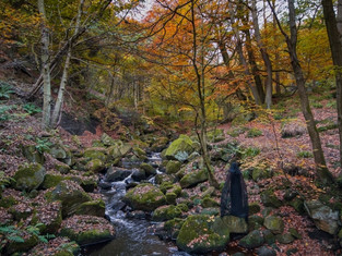 Padley Gorge, Peak District, England